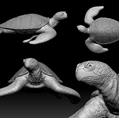 images/gallery/seaturtle final.jpg